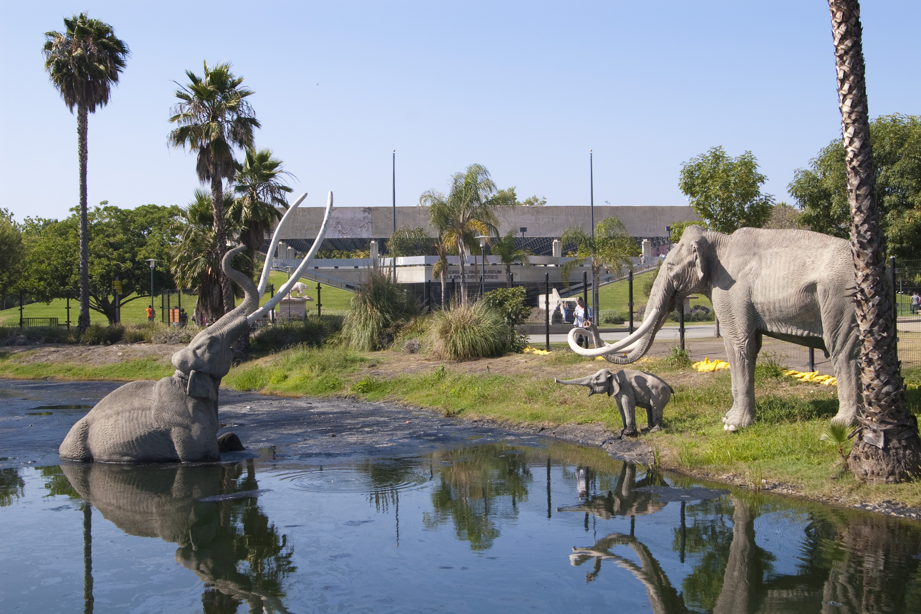 la brea tar pits Serious scientific excavations didn't commence at the la brea tar pits until the beginning of the 20th century, but the history of the pits stretches back long.